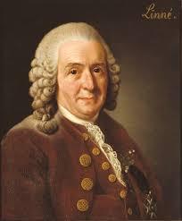 Målning föreställande Carl von Linné
